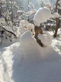 雪在我多雪的有机庭院里 库存图片