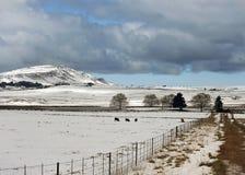 雪在新生米德兰平原 库存图片