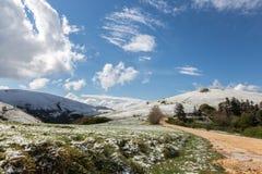 雪在春天 库存图片