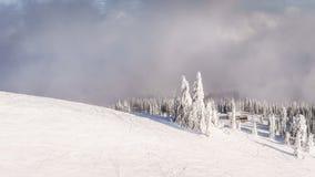 滑雪在林木线上 库存图片