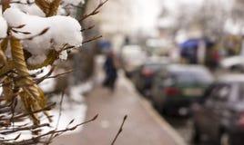 雪在树枝,城市街道,选择聚焦熔化 库存照片
