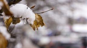 雪在树枝,城市街道,选择聚焦熔化 库存图片