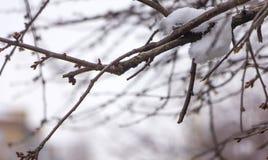 雪在树枝,城市街道,选择聚焦熔化 免版税库存照片