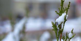 雪在树枝,城市街道,选择聚焦熔化 免版税图库摄影