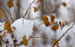 雪在树枝,城市街道,选择聚焦熔化 免版税库存图片