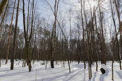 雪在森林里 免版税库存图片