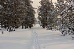 滑雪在森林里 库存图片