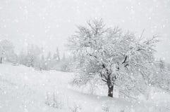 雪在森林里 免版税库存照片