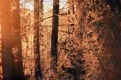 雪在森林里 库存图片
