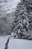 雪在森林 库存图片