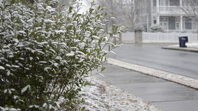 雪在灌木积累在郊区邻里 股票视频