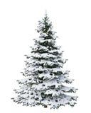 雪在白色背景隔绝的圣诞树 图库摄影