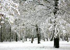雪在秋天公园 免版税库存图片