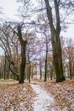 雪在10月在公园 库存照片