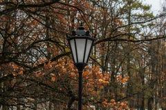 雪在10月在公园 免版税图库摄影