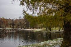 雪在10月在公园 免版税库存图片
