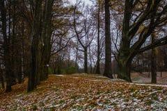 雪在10月在公园 免版税库存照片