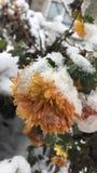 雪在11月 免版税库存图片