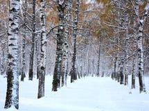 雪在10月 图库摄影
