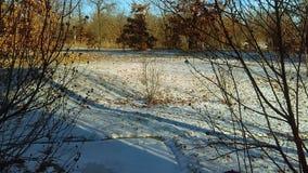 雪在12月 库存图片