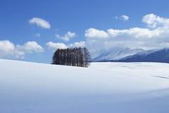 雪场面在日本 免版税库存图片