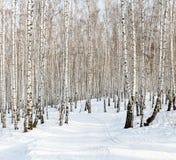 滑雪坡道 库存照片