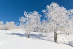 雪城镇结构树  免版税库存图片