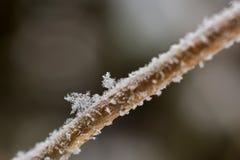 雪大剥落在分支的 雪花选择聚焦在tr的 免版税库存照片