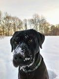 雪实验室 库存图片