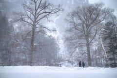 雪山在北海道,日本 免版税图库摄影