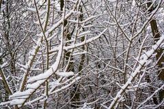 雪报道的小分支-冬天抽象背景1 免版税库存照片