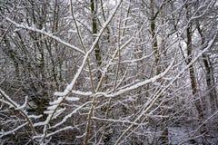 雪报道的小分支-冬天抽象背景2 库存照片