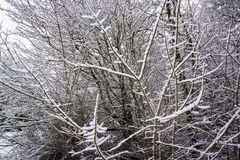 雪报道的小分支-冬天抽象背景3 库存照片