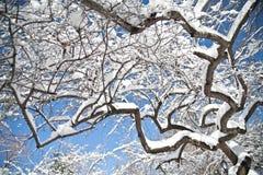 雪报道的树枝在中央公园冬天 免版税库存照片