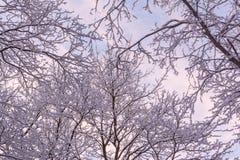 雪报道的美好的分支在奇迹冬天森林里 免版税库存照片