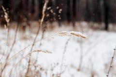 雪抽象冬天背景  图库摄影