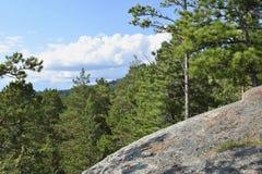 雪松与古老石头的杉树看法  免版税库存图片