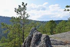 雪松与高石头的杉树看法  免版税库存照片