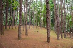 雪松公园 库存图片