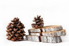 雪松和杉木锥体,在白色背景的木树桩切片 免版税图库摄影