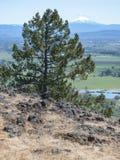 雪松和Mt麦克洛克林在俄勒冈南部 库存照片
