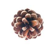 雪松在白色背景隔绝的杉木锥体 免版税图库摄影