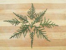 雪松柏叶子在木背景的星形状 库存照片