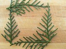 雪松柏在木背景的叶子正方形 免版税库存图片