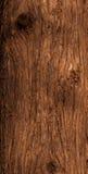 雪松树干吠声 免版税图库摄影