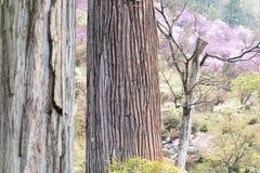 雪松树干以杜娟花和嫩绿色为背景的 库存照片