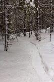 雪板运动踪影在雪的在森林 图库摄影
