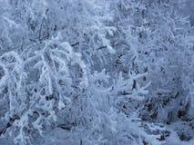 雪树冬天西伯利亚路Khamar大坂 免版税图库摄影