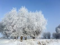 雪树在冬天 免版税库存图片