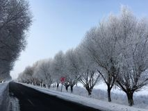 雪树在冬天 库存照片